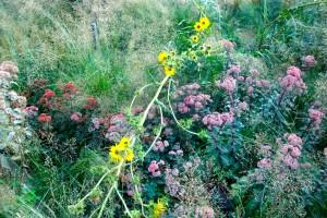 HiLine Flowers